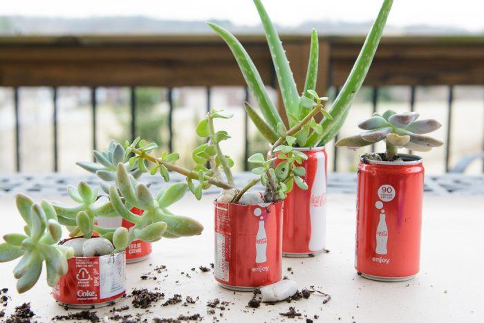 http://www.polkadotchair.com/wp-content/uploads/2015/03/coke-can-succulent-garden-25-700x467.jpg