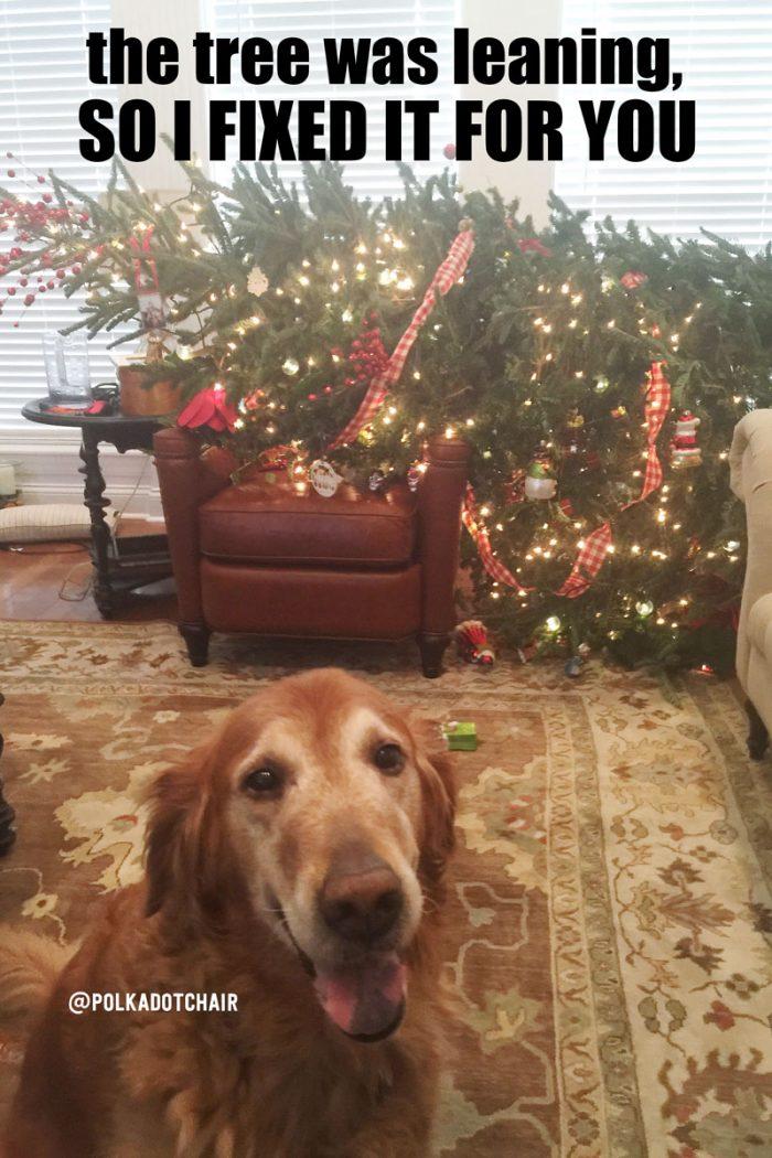 christmas-tree-dog