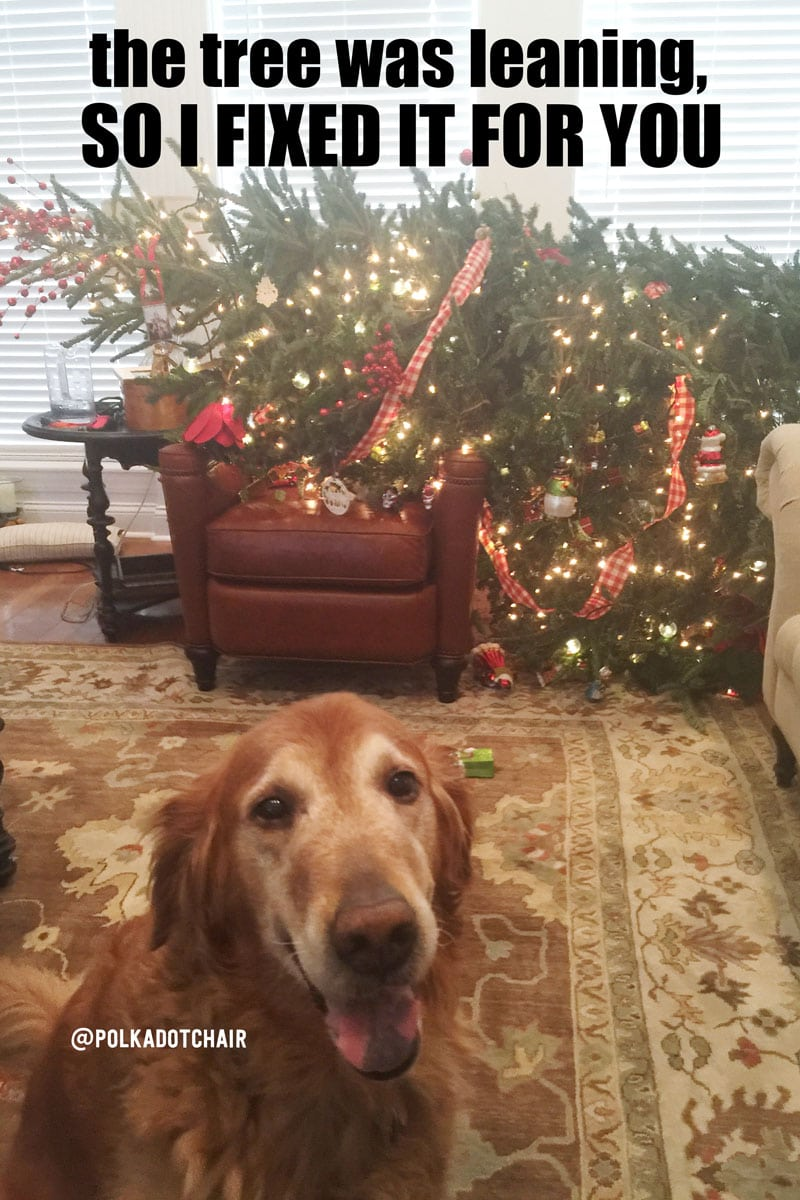 How to care for a fresh christmas tree for How did the christmas tree come about